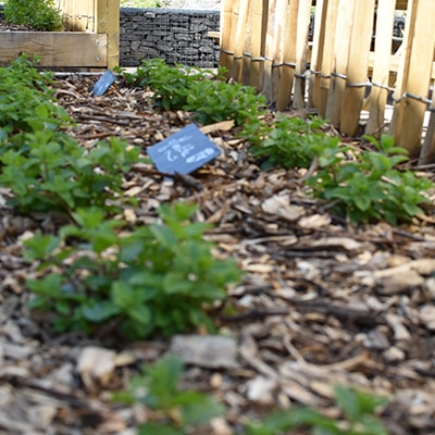 herbes-aromatiques-bacs-potager