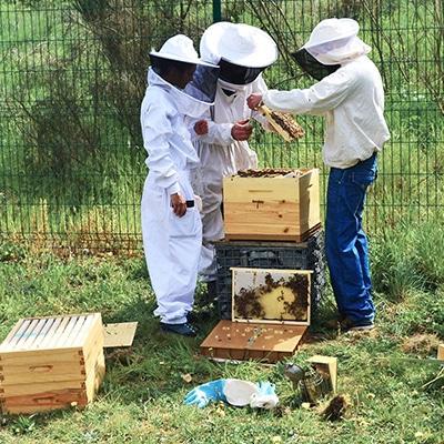 ruches-site-bonnaire-traiteur