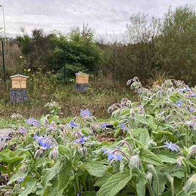 fleurs-ruches-potager