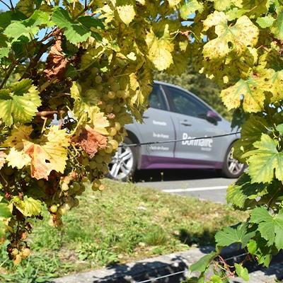 raisin-verger-bonnaire-voiture-electrique