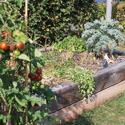 tomates-cerises-choux-bac