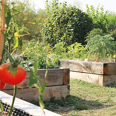 tomates-grappes-coeur-de-boeuf-choux